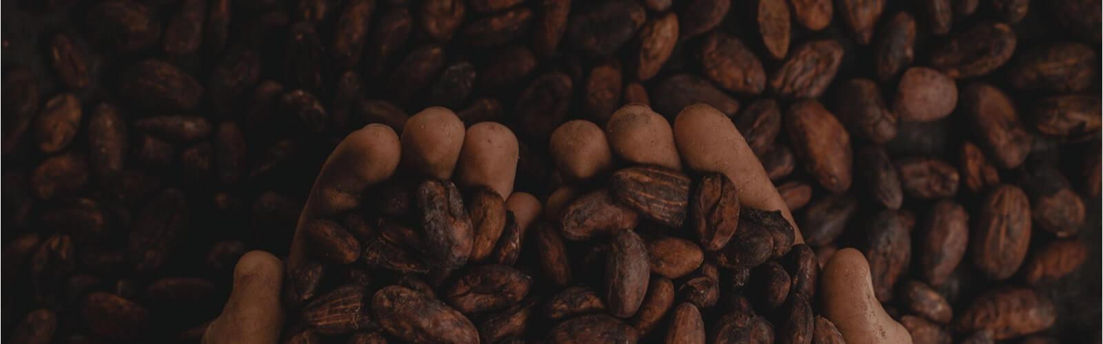 Spectra Cocoa Bean - Spectra Melangers